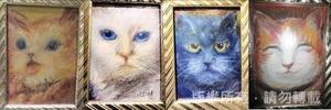 貓咪的喜、怒、哀、樂